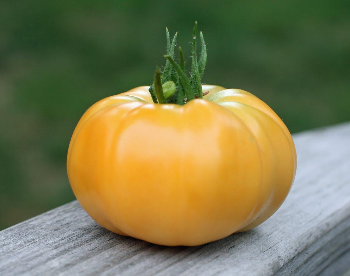 Tomate jaune2